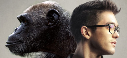 Man vs Monkey