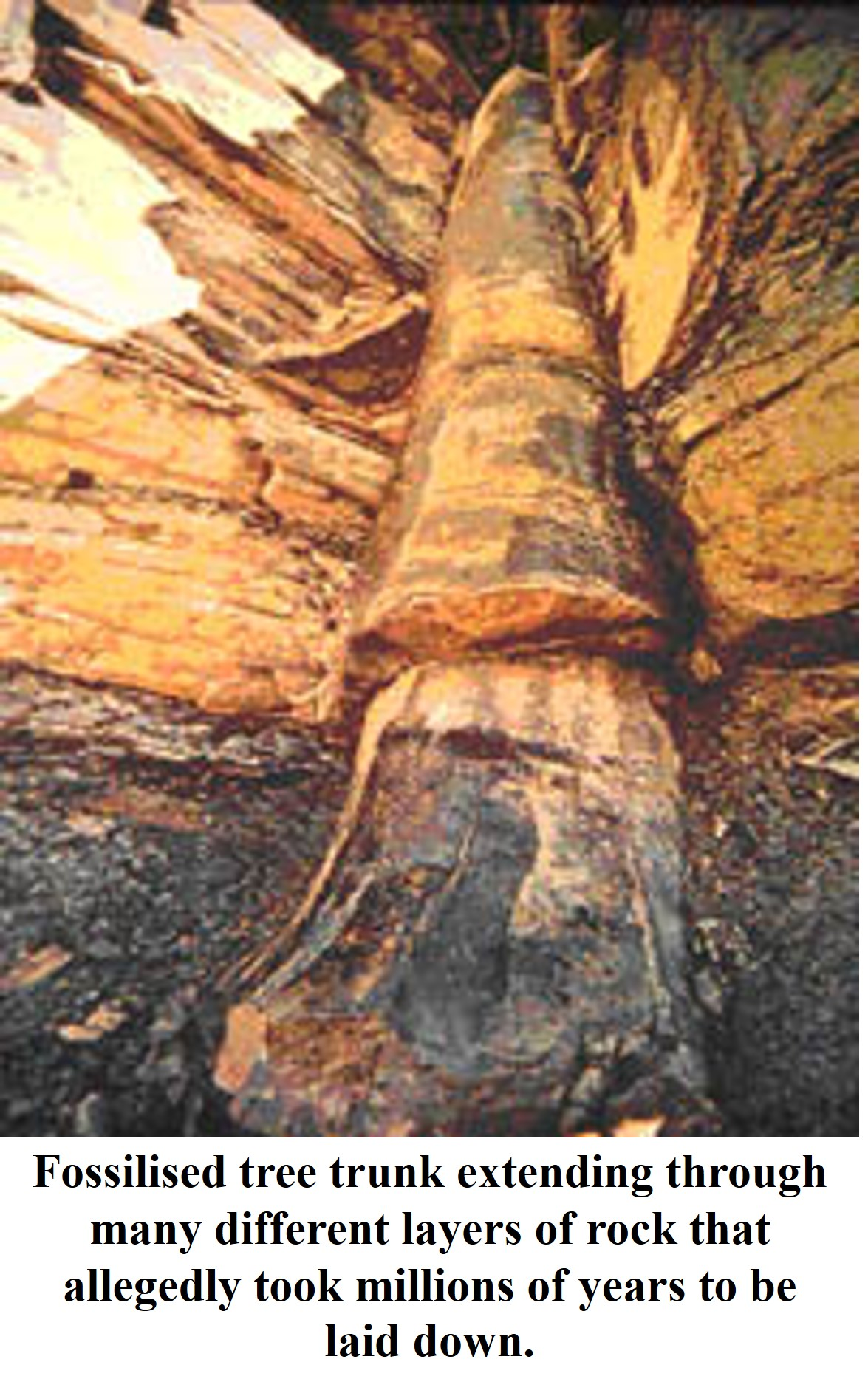 Fossilized Tree Trunk
