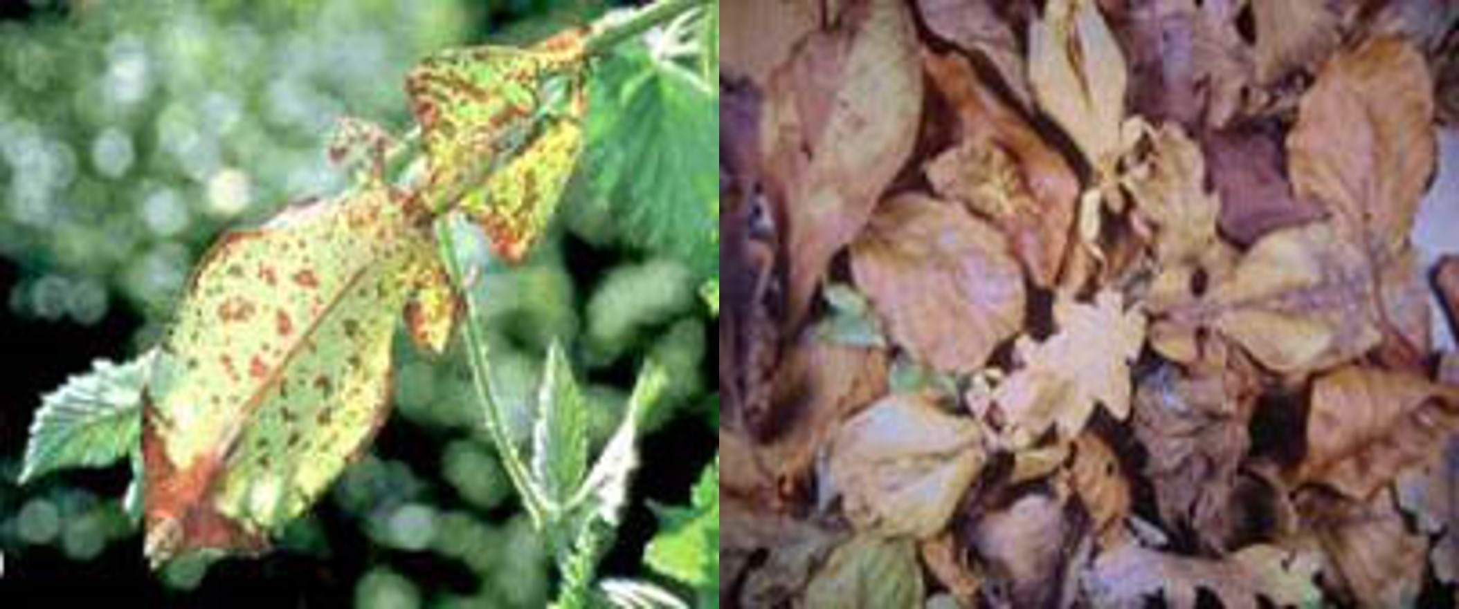 Picture of a leaf